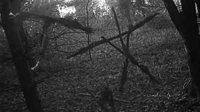 The original Blair Witch Project was a huge indie hit and this guide explore the Blair Witch legend.