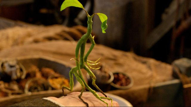 Meet Picket the Bowtruckle in Third Clip from Fantastic Beasts