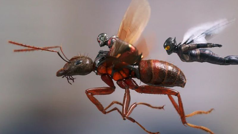 New Ant-Man and The Wasp Photos, Details on Sequel