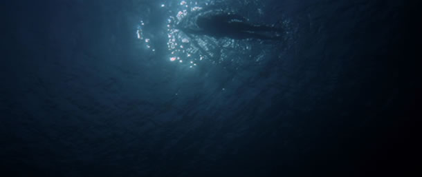 The Best Horror Movies Inspired by True Events - Jaws
